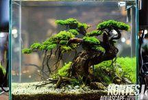 Plant aquarium