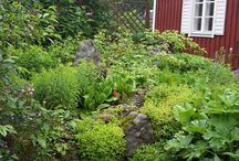 Minun puutarhani