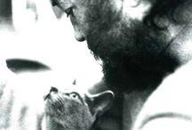 Los gatos / Gatos de todos