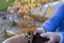 Trees for small gardens / Small trees with big impact