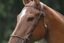 Le cheval et l'équitation / En équitation, on a besoin de matériel et d'équipement pour le cheval comme pour le cavalier qui doit acquérir un minimum de connaissances, les disciplines d'équitation étant très nombreuses et variées.