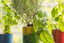 Rostliny, kytičky