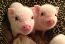 Świnie