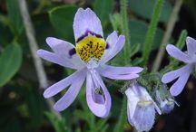 Flora nativa de Chile