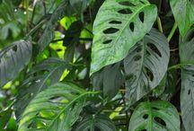 Plants - foliage / leaves / Nature