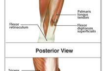 Anatomie algemeen / Een prachtig vak, anatomie, de leer van de bouw van het menselijk lichaam.