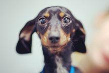 Dogs / Mooie foto's van onze trouwe metgezellen. Honden met expressie.