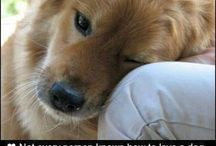 Furbabies with a purpose