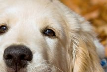 love dogs ❤