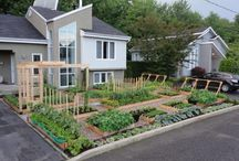 Ideas for the front yard