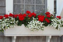 Kompozycje na balkon
