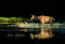 Art of Photography - Nature Photography & Nature Photos