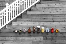 Birdhouses / by Beth Moore