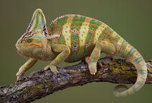 Fotos de Réptiles Petclic