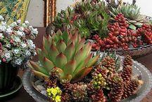 Kertészkedés / Növényekről és a hozzá tartozó kiegészítésekről  és eszköztárról