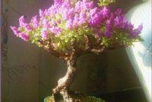 Drzewka i inne rośliny