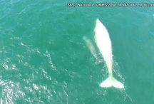 Delfíni, velryby, plejtváci, kosatky