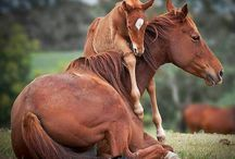 animals / beautiful images of love of animals