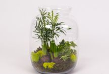Terrariums made of dreams / Terrarium ideas, to warm up your home or your office. Great gifts for friends and family.