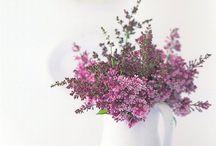 Beautiful Flowers / by Anna Rebecca