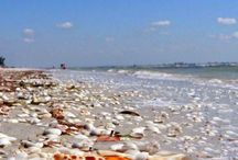 Seashells and where to find them