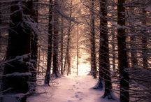 Whiteout   Forest