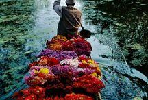 Kashmir / Antonina Vella se inspira in crearea acestei colectii de tapet din locuri legendare, cum ar fi utopicul tinut Shangri-La, adeseori localizat in vechea vale a Kashmirului. Pornind de la aceste surse colectia include modele opulente, cu straluciri metalice, cu texturi detaliate!