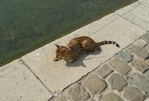 Cat stuff / by Bianca Bueno