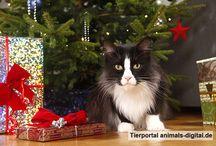 Weihnachten mit Hund und Katze / Weihnachten feiern mit Hund, Katze, Meerschweinchen & Co.