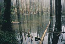 Wilderness: Bogs