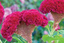 fiori e natura