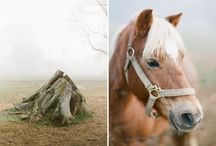 Horses / by Patti Brown