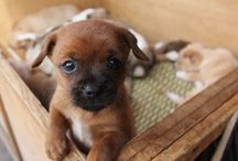 puppies / by Joanne Anderson-Beaty