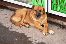 бездомные собаки / Фото и текст про бездомных животных