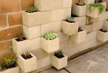 My Future Garden: Succulents