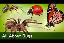 Pre-K Bugs