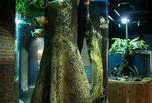 fish zoo