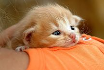 mój kot milka!!!!!!