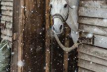 Winter beauties❄️