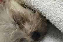 ANIMAL WELFARE::. Animal In Urgent Need