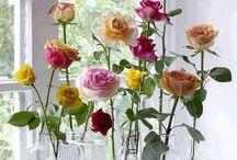 asztali virágok