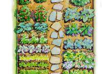 Tuin:Groente(vegetable garden)