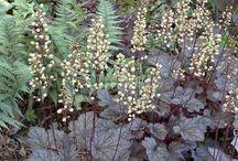 piante da ombra