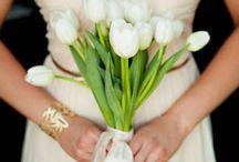 Цветы тюльпаны / Замечательная подборка самых красивых цветов мира