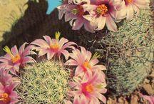 ÇİÇEKLER (Flowers)
