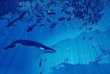 고래가 좋아
