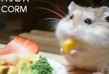 Funny but cute / Chipmunk found corn