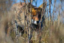 My wildlife photography