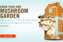 Back to the Roots! / DIY Mushroom Kits: A Tutorial / by Back to The Roots