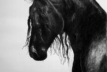 Černí koně. Super